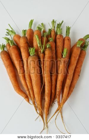More Carrots From The Garden