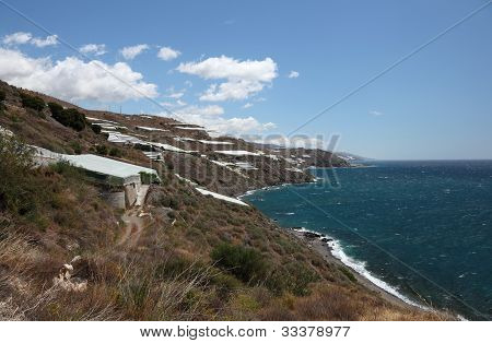 Plantations At The Coast In Andalusia