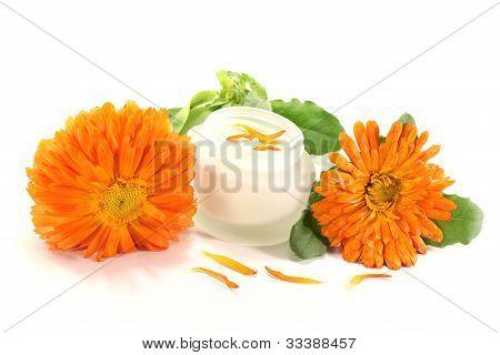 Fresh Marigold Salve