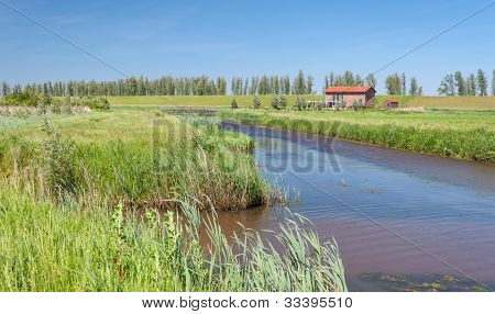 Dutch Polder Landscape In Springtime