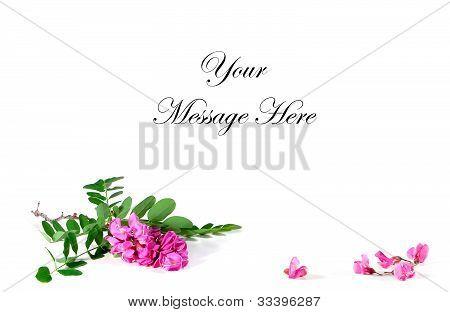 Roseacacia Locust Card