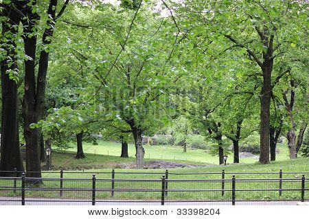 Spring Time Trees and Manhattan Schist Rock Outcrop in Central Park New York City