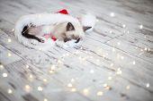 Kitten sleep in christmas hat. Little cat sleep on floor near christmas light poster