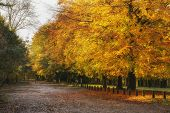 Beautiful Autumn Fall Colorful Vibrant Forest Landscape poster