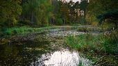 Morralee Wood Tarn At Allen Banks, And Staward Gorge In The English County Of Northumberland Which W poster