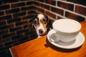 Adorable Dachshund Dog Sitting In A Cafe poster