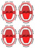 Teeth. Oral Cavity. Vector Illustration Of The Oral Cavity With Teeth That Are Numbered For Dental C poster