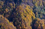 Beautiful Slopes Of Mixed Forest In Vibrant Colors Of Fall Lit By Warm Sunlight. Forestry, Nature An poster