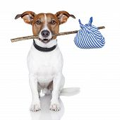 foto of runaway  - Dog With A Stick And A Blue Bad - JPG