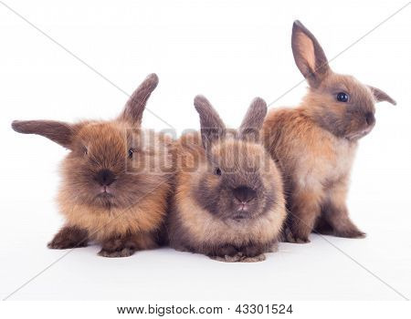 Three Rabbits Isolated On The White.