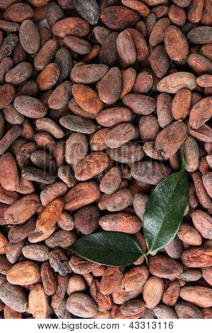 Cocoa beans with leaves, close up