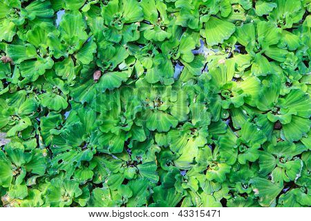 Green Water Weeds Pattern