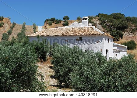 Olive grove and farm, Olvera, Spain.