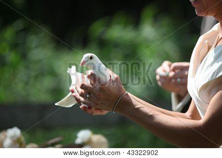 white wedding dove