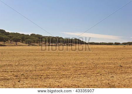 Golded Plain