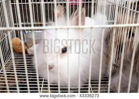 White Rabbit In The Cage