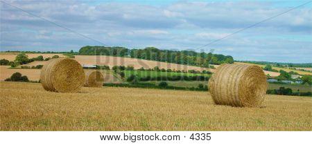 Harvest Fields With Straw