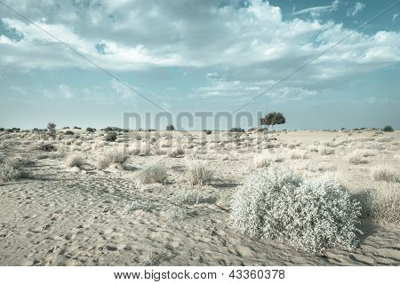 One Rhejri Tree In Desert Undet Blue Sky