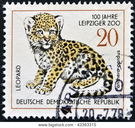 GERMANY - CIRCA 1978: A stamp printed in Germany shows leopard, circa 1978