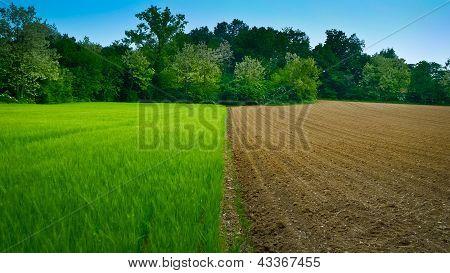 Half And Half Wheat Field
