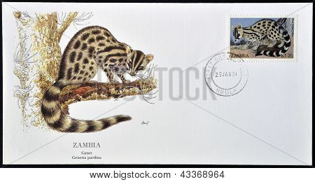 A postcard printed in Zambia shows a genet genetta pardina