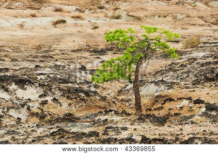 Green Tree And Desert