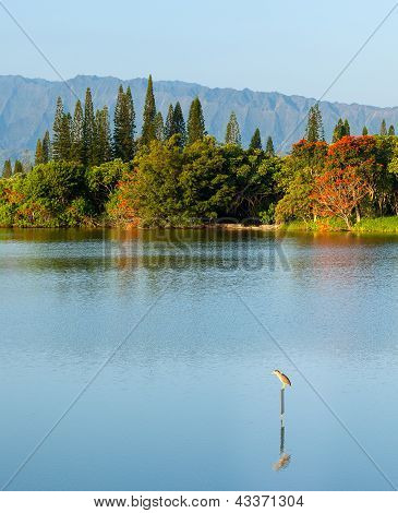 Bird Perching On Sign In Calm Lake By Na Pali