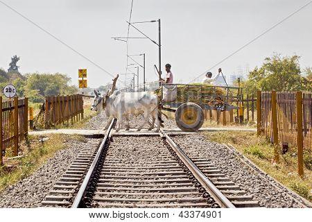 Bullock Cart Over Open Level Crossing