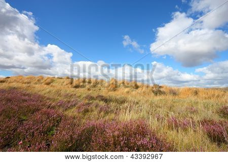 New Zealand Heath