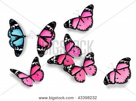 One Blue And Many Pink Butterflies, As Concept Of Relations