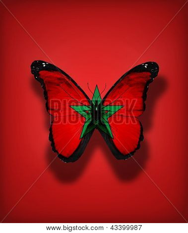 Moroccan Flag Butterfly, Isolated On Flag Background
