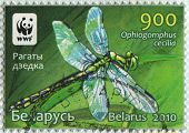 BELARUS - CIRCA 2010: A stamp printed in Belarus shows image of the Dragonfly Ophiogomphus cecilia,