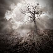 stock photo of sorrow  - A dark tree is alone in the woods with large roots growing on an old dry landscape against a full moon with clouds in the sky for a sad scary or time concept - JPG