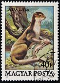 A stamp printed in Hungary shows European Otter (Lutra lutra)