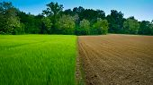 stock photo of rich soil  - Newly ploughed wheat field in Italy half and half - JPG