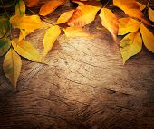 foto of acorn  - Autumn forest background - JPG