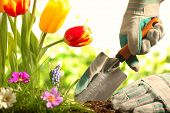 image of hand tools  - Planting Flowers in a garden - JPG