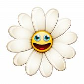 Smiling flower, happy daisy