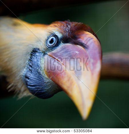 Exotic bird close-up shot