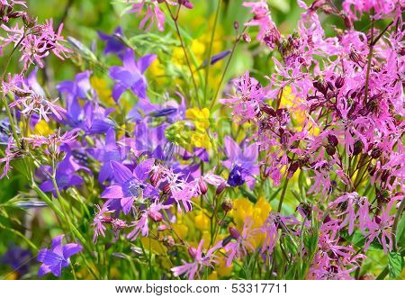 Colorful Meadow Flowers