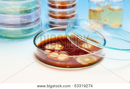 petri dishes with samples of biological culture, medical research