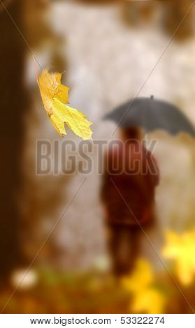 Falling Leaf Of A Maple Against The Person