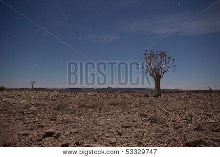 Generic Desert Scene With Quiver Tree At Midnight