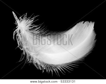 Closeup of white feather, isolated on the black background.