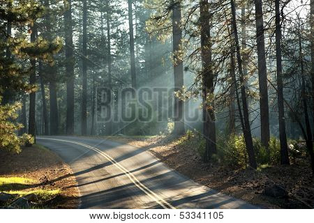 Early morning sunlight in the forests of Mariposa Grove, Yosemite National Park, California, USA