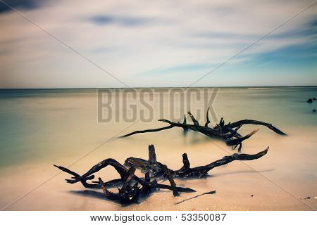 Dead Trees On A Beach