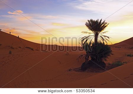 Sunset in the Erg Chebbi desert in Morocco Africa