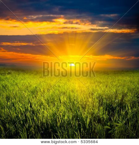 Beautiful Sunset In Meadow