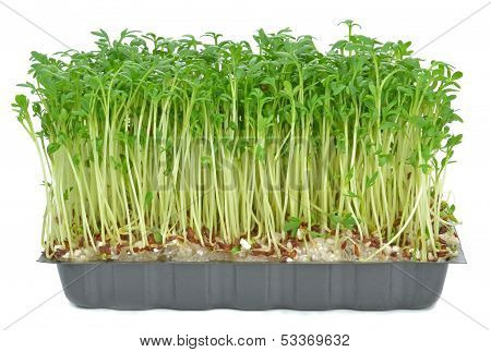 Watercress in a plastic tray