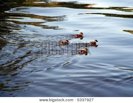 Four Ducklings